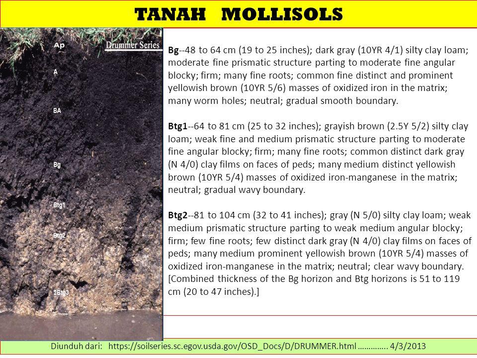 TANAH MOLLISOLS