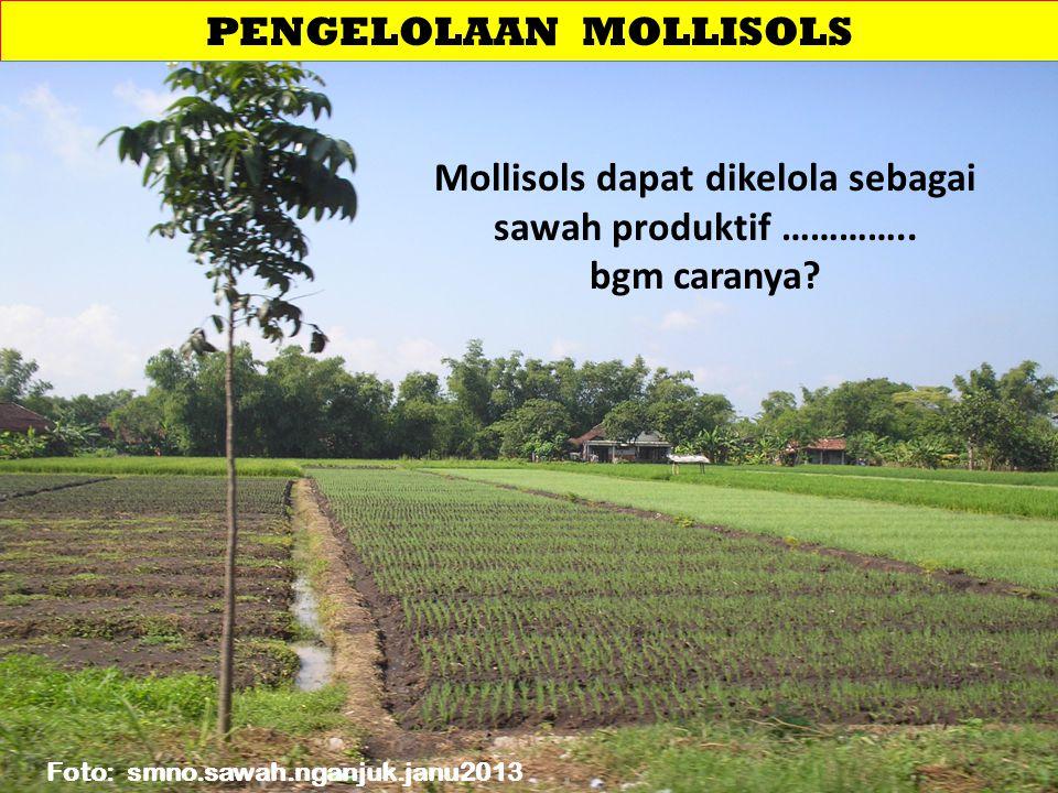 PENGELOLAAN MOLLISOLS
