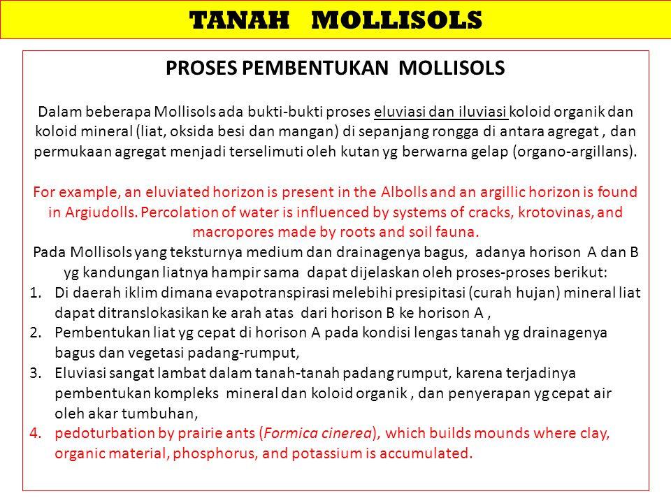 PROSES PEMBENTUKAN MOLLISOLS