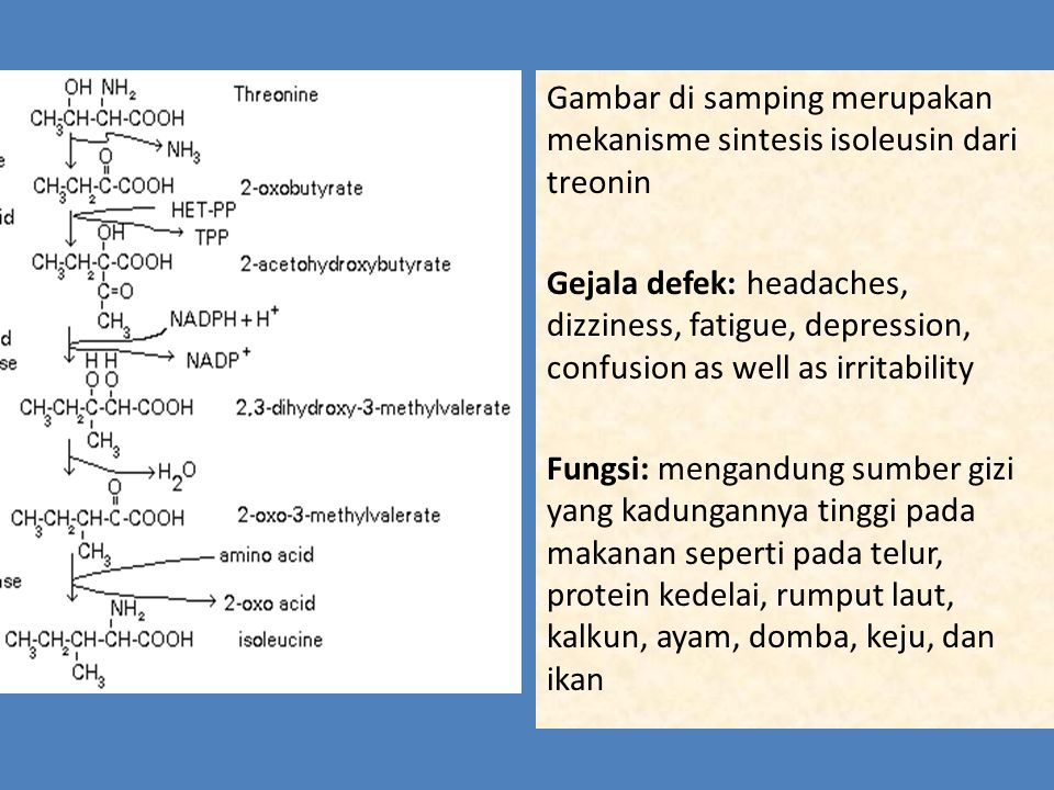 Gambar di samping merupakan mekanisme sintesis isoleusin dari treonin Gejala defek: headaches, dizziness, fatigue, depression, confusion as well as irritability Fungsi: mengandung sumber gizi yang kadungannya tinggi pada makanan seperti pada telur, protein kedelai, rumput laut, kalkun, ayam, domba, keju, dan ikan