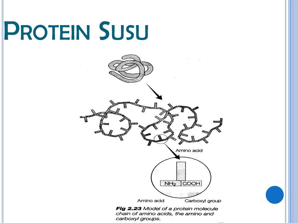 Protein Susu