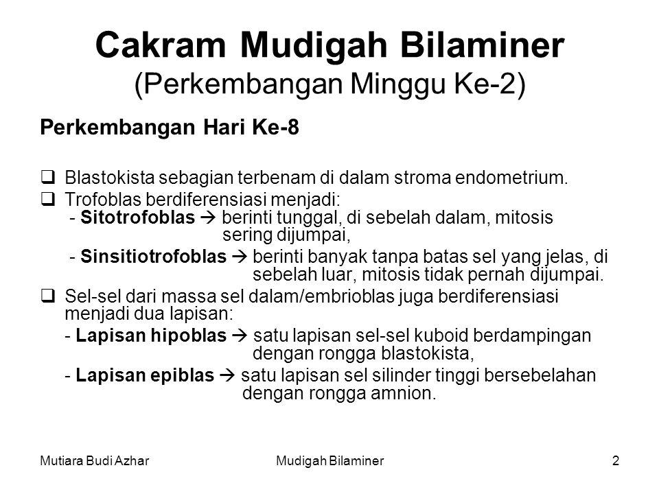 Cakram Mudigah Bilaminer (Perkembangan Minggu Ke-2)
