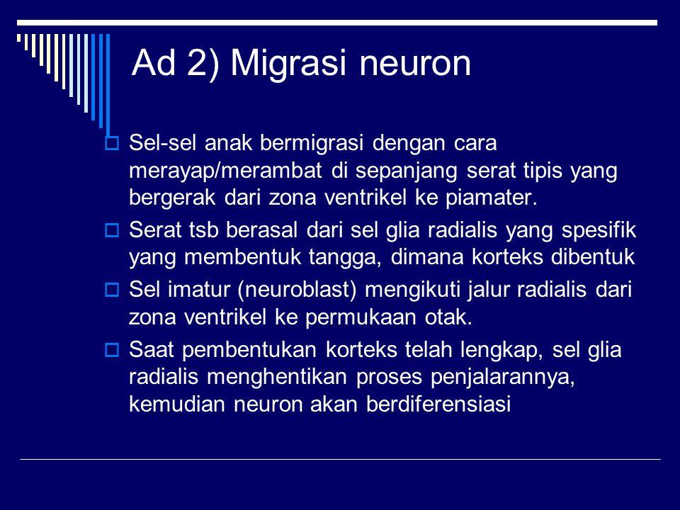 Ad 2) Migrasi neuron Sel-sel anak bermigrasi dengan cara merayap/merambat di sepanjang serat tipis yang bergerak dari zona ventrikel ke piamater.