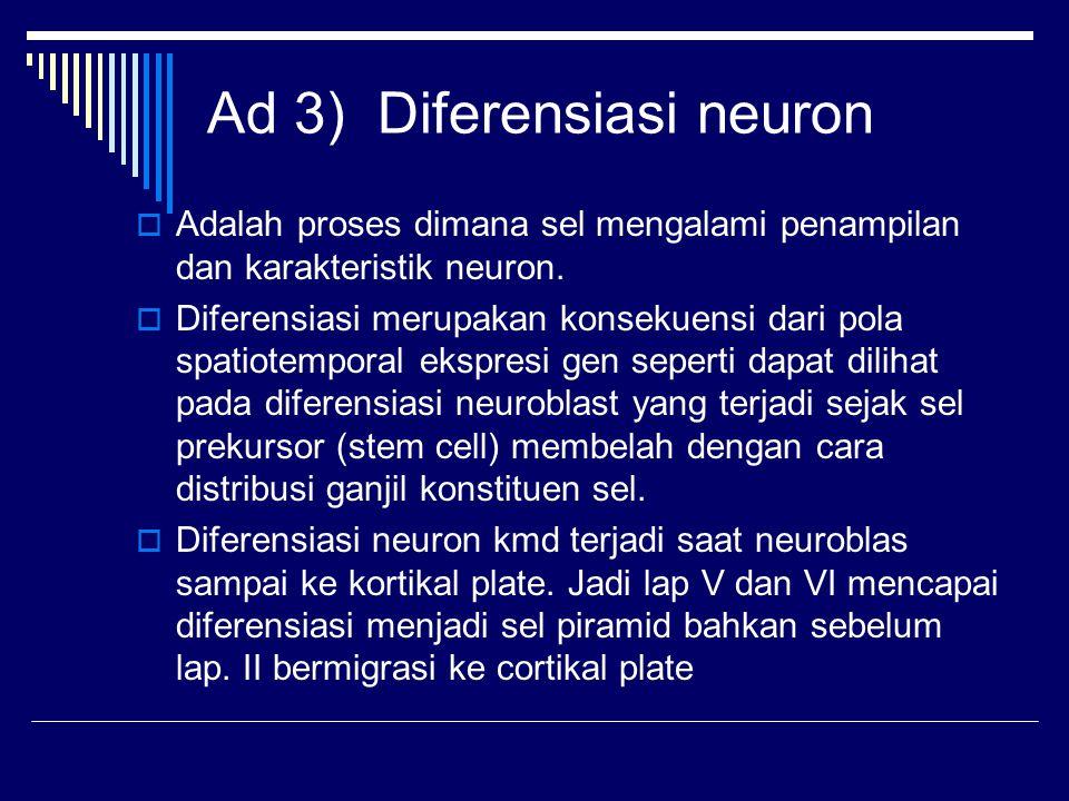 Ad 3) Diferensiasi neuron
