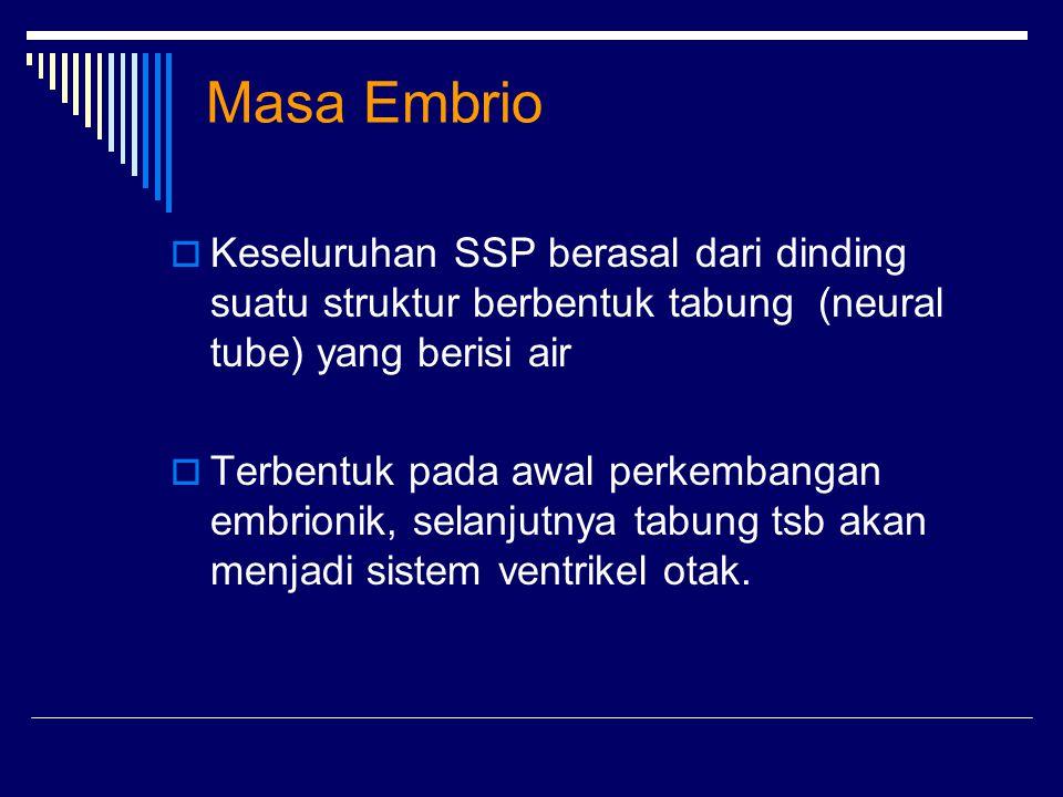 Masa Embrio Keseluruhan SSP berasal dari dinding suatu struktur berbentuk tabung (neural tube) yang berisi air.