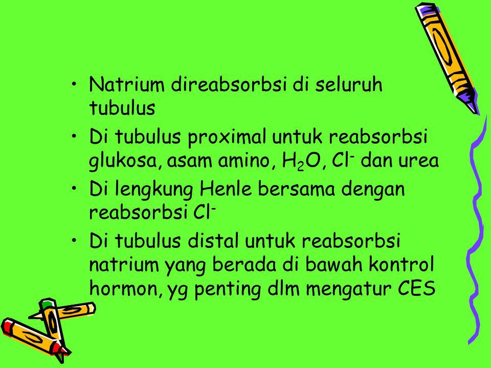 Natrium direabsorbsi di seluruh tubulus