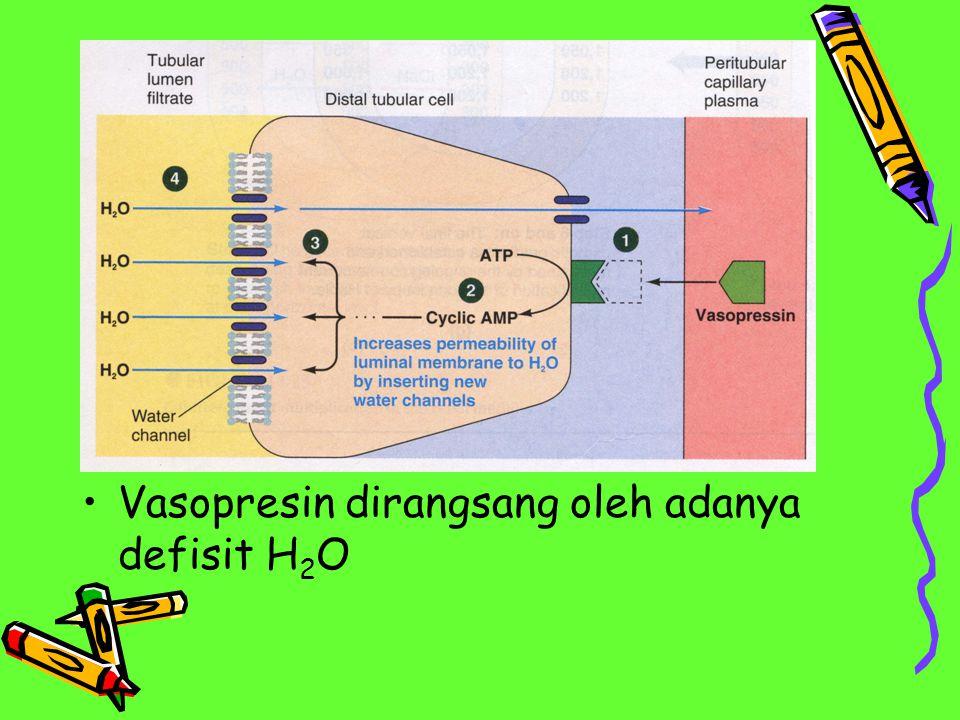 Vasopresin dirangsang oleh adanya defisit H2O
