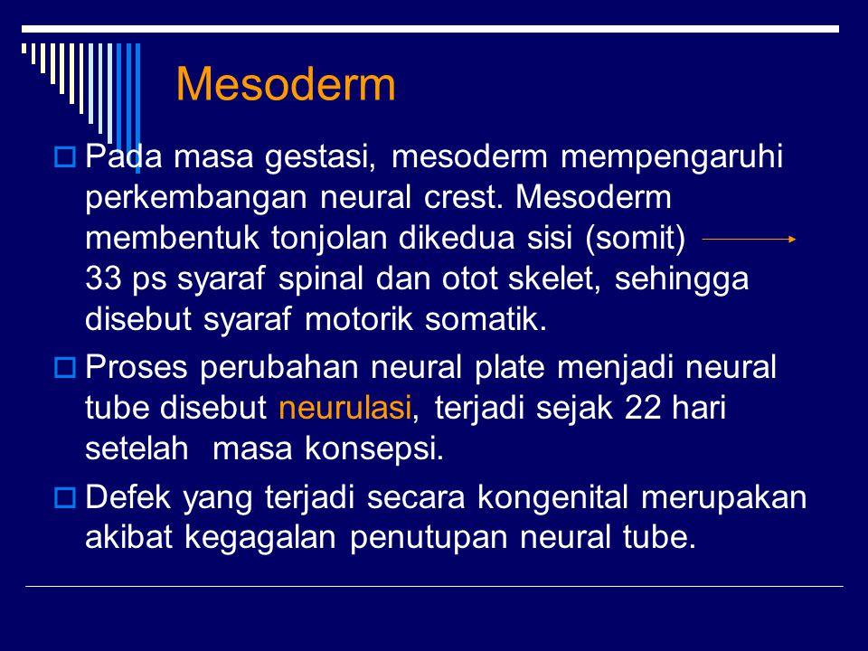 Mesoderm