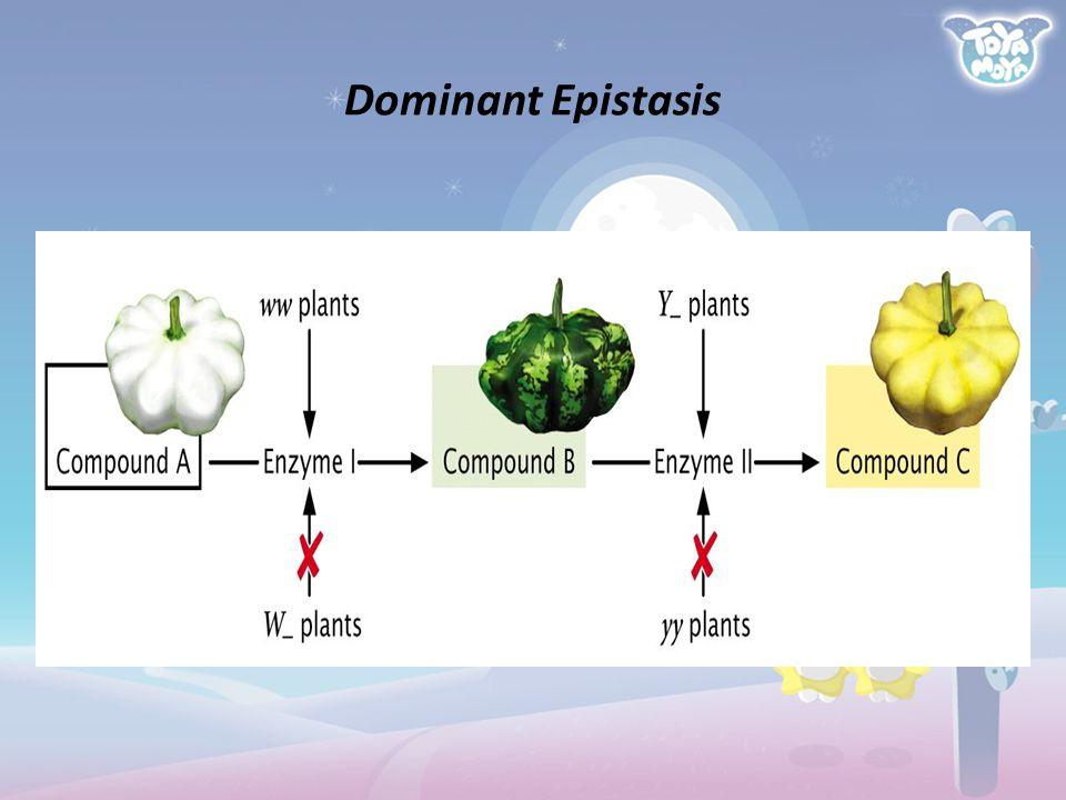 Dominant Epistasis 29