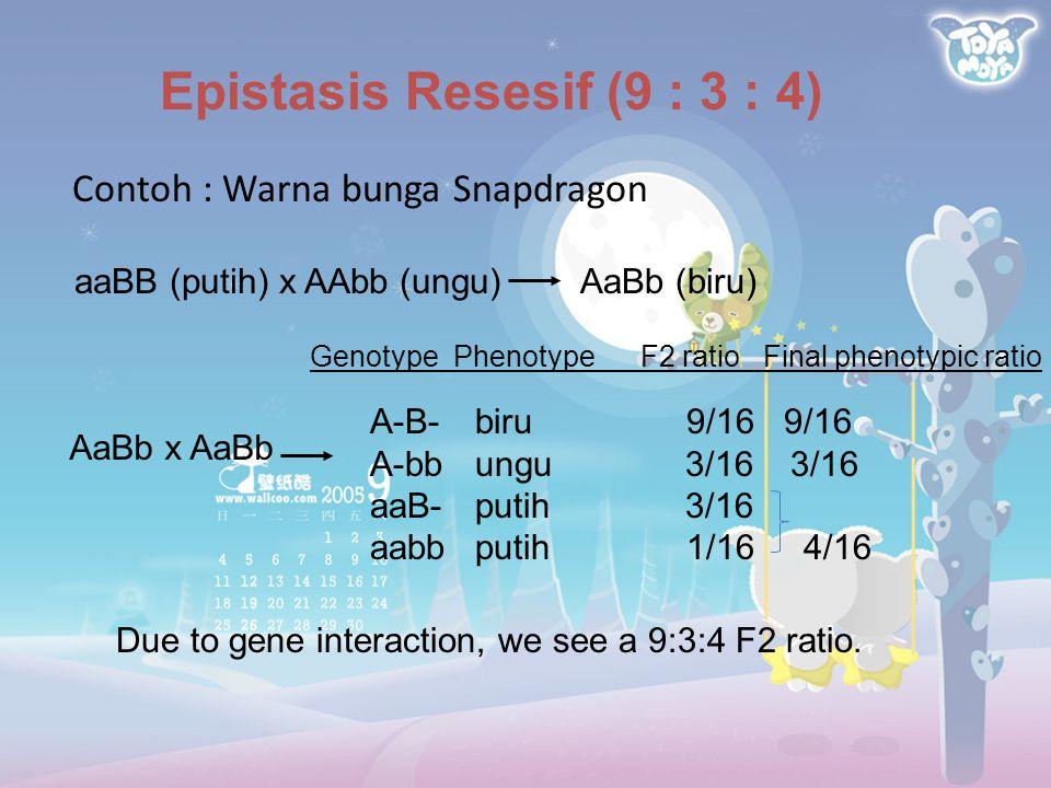 Epistasis Resesif (9 : 3 : 4)