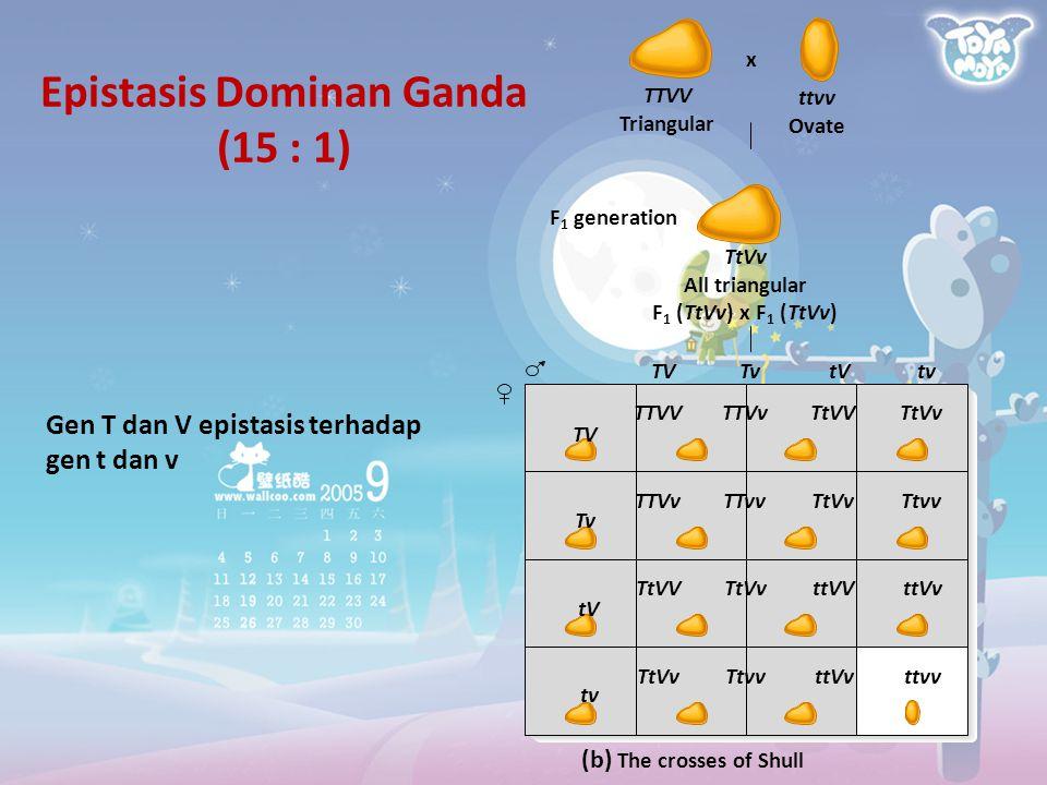 Epistasis Dominan Ganda (15 : 1)