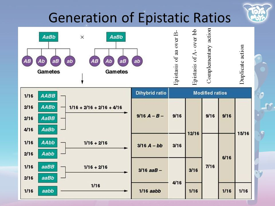 Generation of Epistatic Ratios