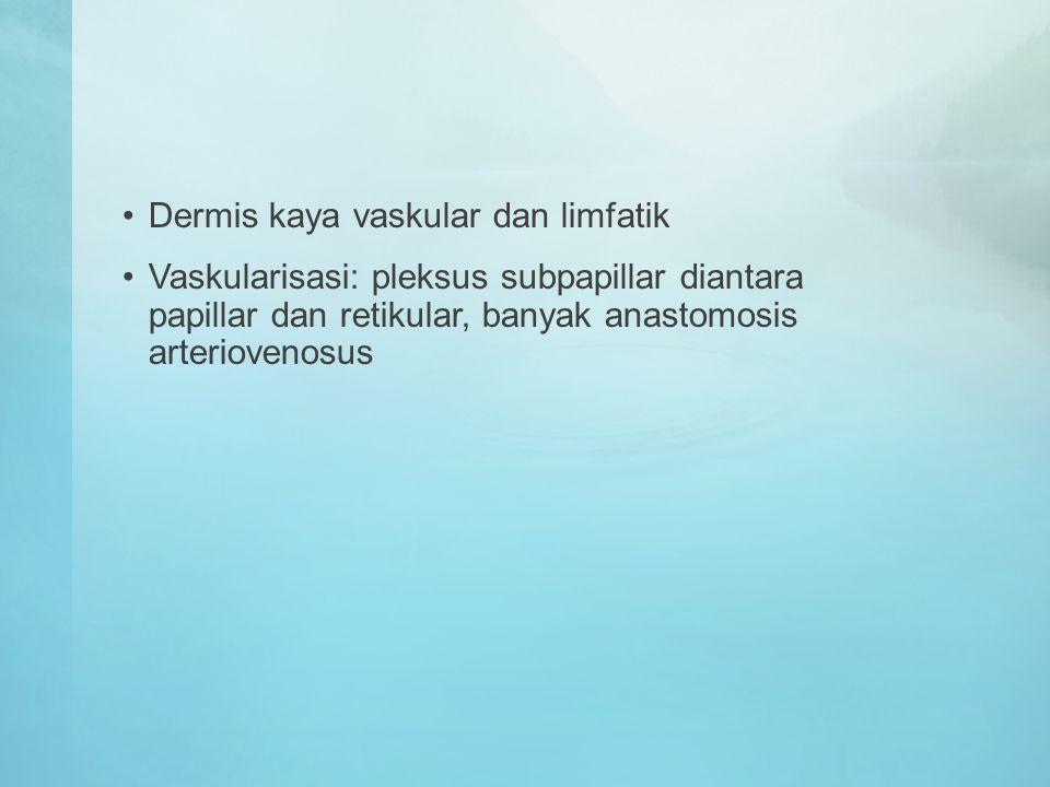 Dermis kaya vaskular dan limfatik