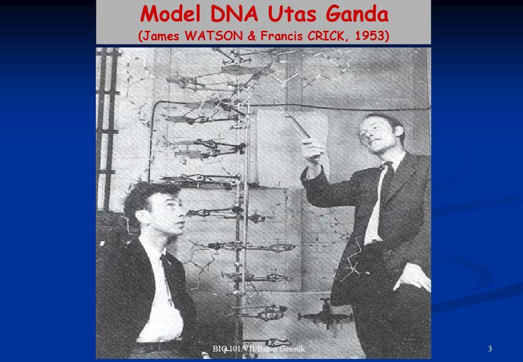 (James WATSON & Francis CRICK, 1953)