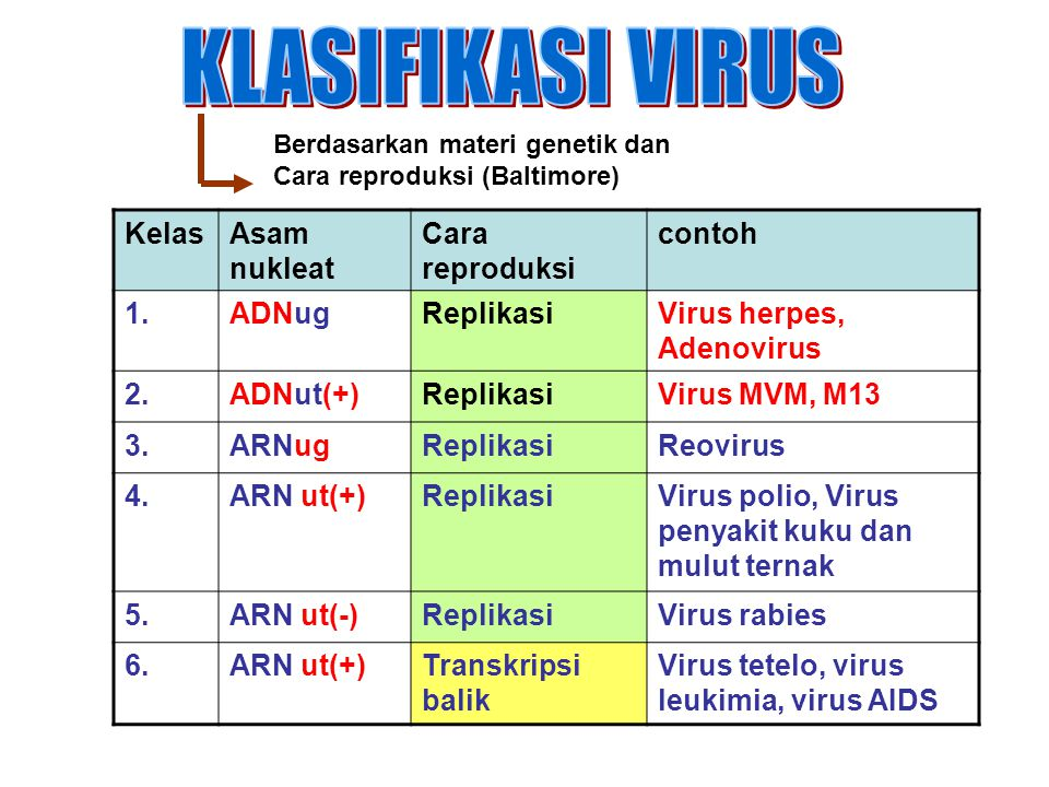 KLASIFIKASI VIRUS Kelas Asam nukleat Cara reproduksi contoh 1. ADNug