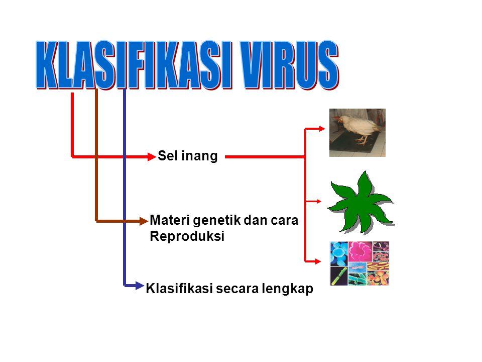 KLASIFIKASI VIRUS Sel inang Materi genetik dan cara Reproduksi