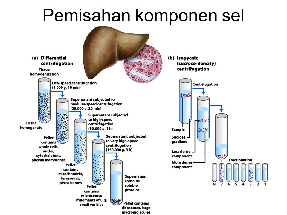 Pemisahan komponen sel