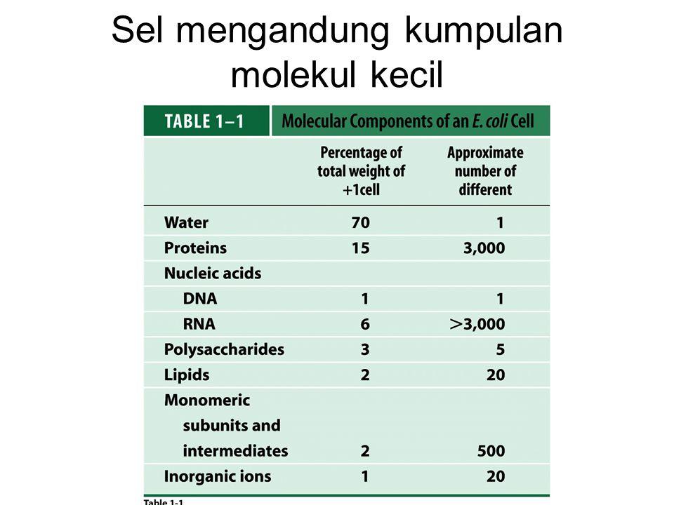 Sel mengandung kumpulan molekul kecil