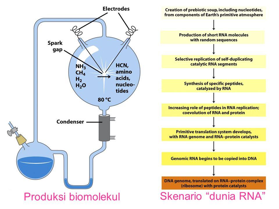 Produksi biomolekul Skenario dunia RNA