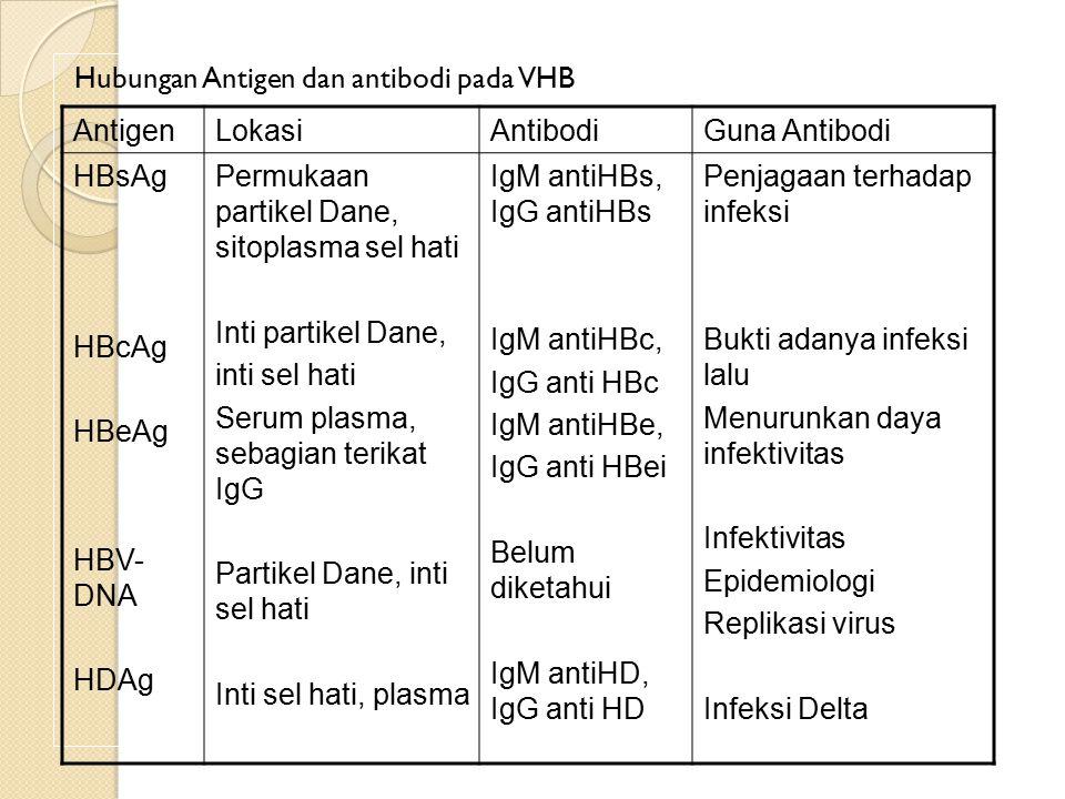 Hubungan Antigen dan antibodi pada VHB