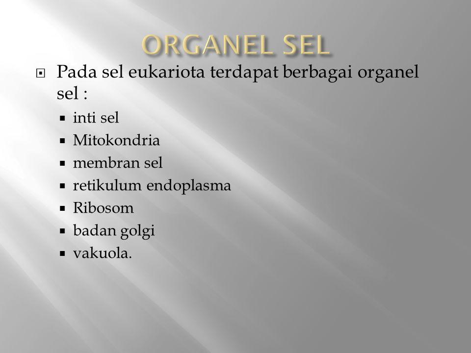 ORGANEL SEL Pada sel eukariota terdapat berbagai organel sel :