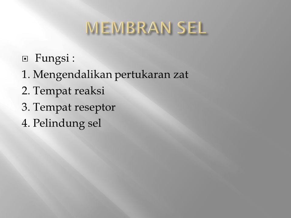 MEMBRAN SEL Fungsi : 1. Mengendalikan pertukaran zat 2. Tempat reaksi