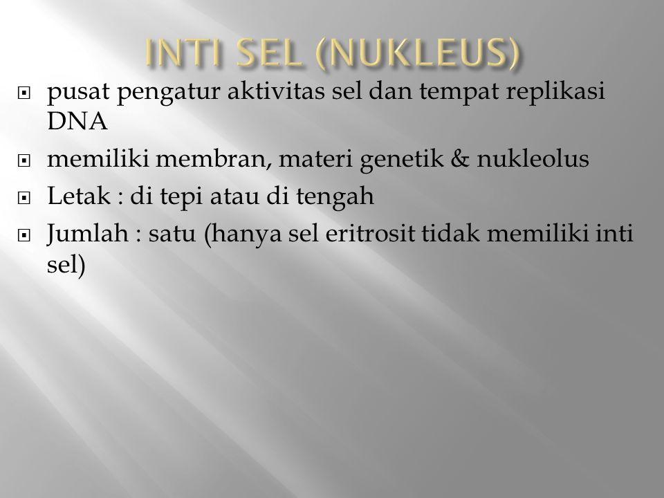 INTI SEL (NUKLEUS) pusat pengatur aktivitas sel dan tempat replikasi DNA. memiliki membran, materi genetik & nukleolus.