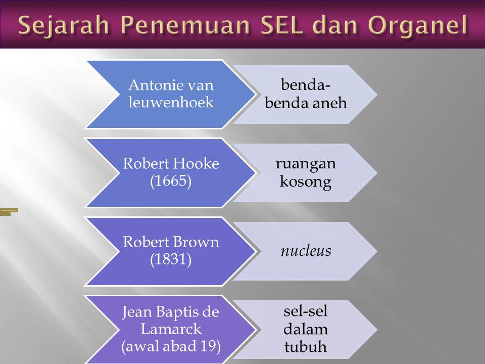 Sejarah Penemuan SEL dan Organel