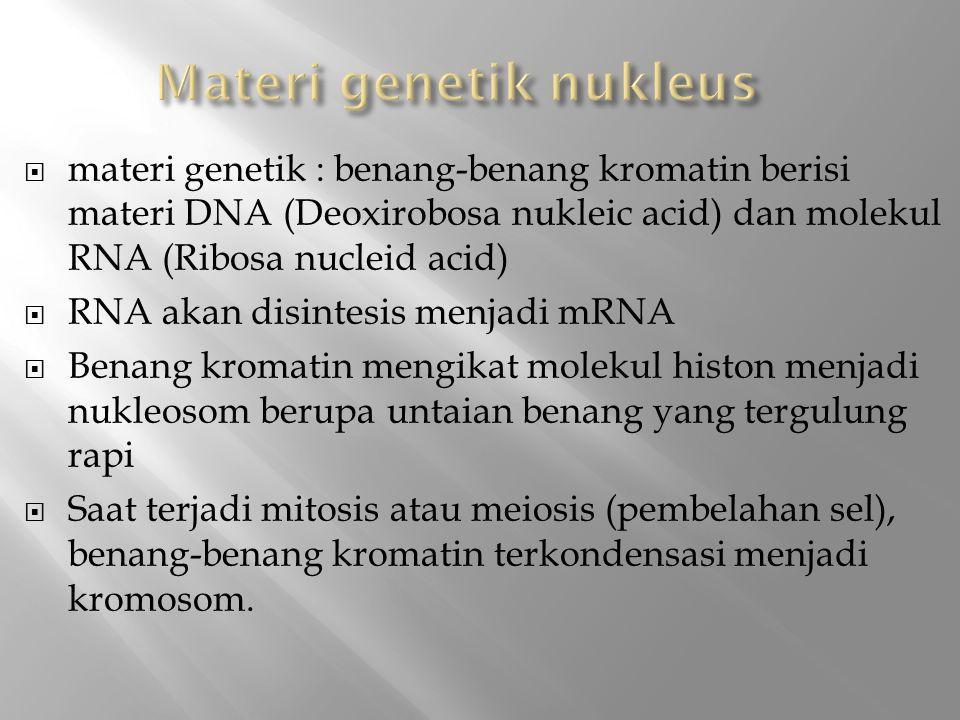 Materi genetik nukleus