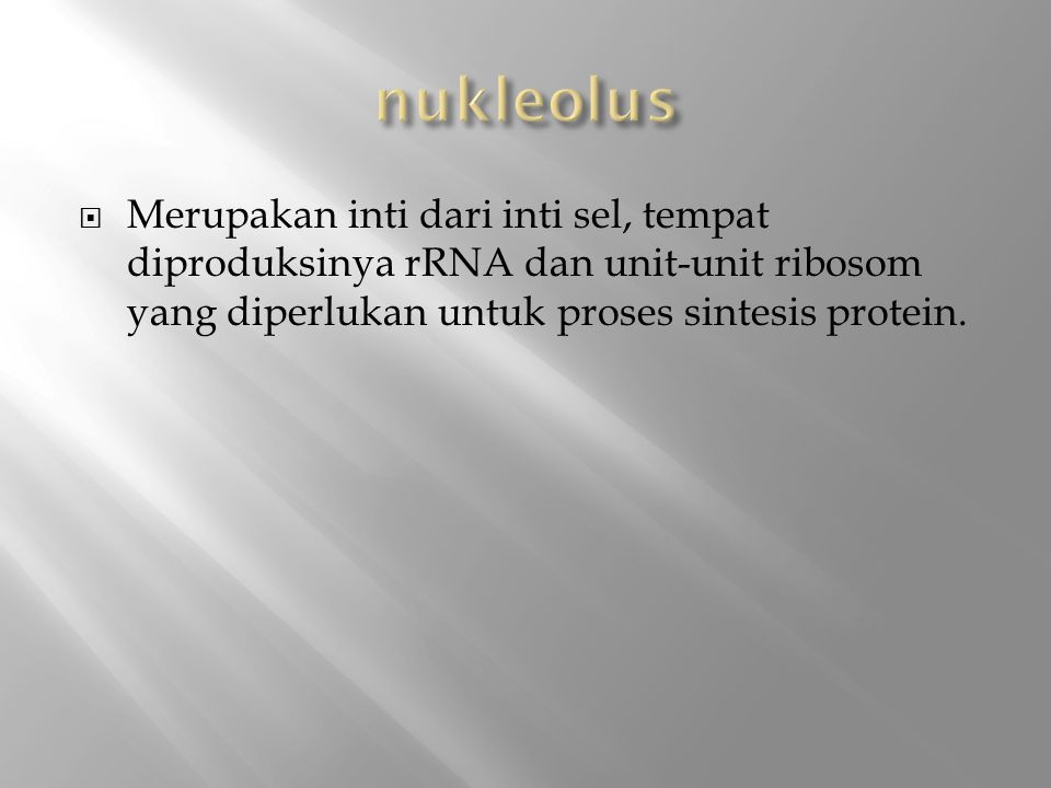 nukleolus Merupakan inti dari inti sel, tempat diproduksinya rRNA dan unit-unit ribosom yang diperlukan untuk proses sintesis protein.