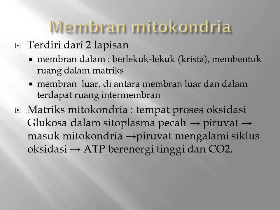 Membran mitokondria Terdiri dari 2 lapisan