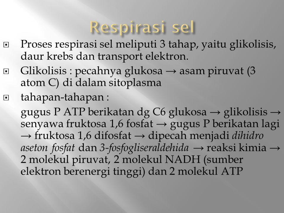 Respirasi sel Proses respirasi sel meliputi 3 tahap, yaitu glikolisis, daur krebs dan transport elektron.
