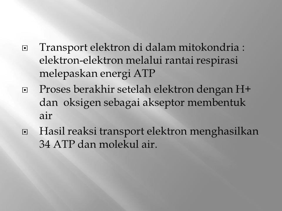 Transport elektron di dalam mitokondria : elektron-elektron melalui rantai respirasi melepaskan energi ATP