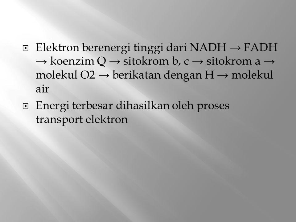 Elektron berenergi tinggi dari NADH → FADH → koenzim Q → sitokrom b, c → sitokrom a → molekul O2 → berikatan dengan H → molekul air
