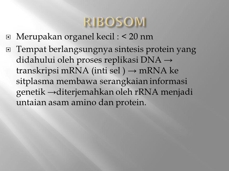 RIBOSOM Merupakan organel kecil : < 20 nm