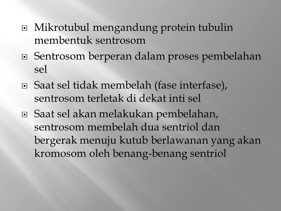 Mikrotubul mengandung protein tubulin membentuk sentrosom