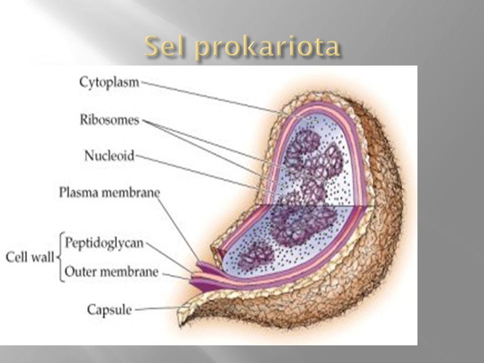 Sel prokariota