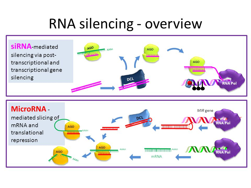 RNA silencing - overview