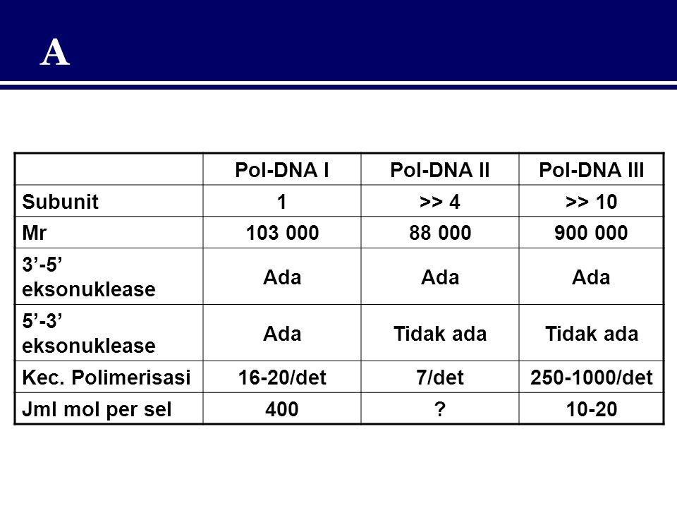 A Pol-DNA I Pol-DNA II Pol-DNA III Subunit 1 >> 4 >> 10 Mr