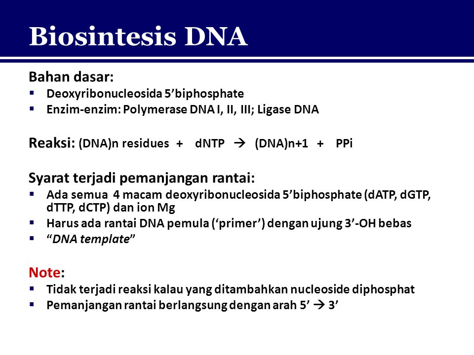 Biosintesis DNA Bahan dasar:
