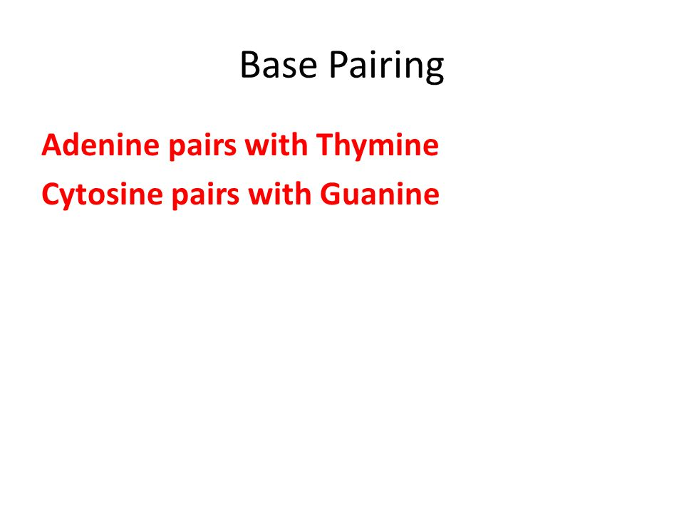 Base Pairing Adenine pairs with Thymine Cytosine pairs with Guanine