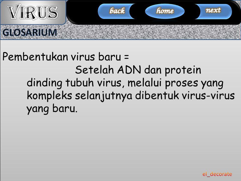 VIRUS GLOSARIUM Pembentukan virus baru =