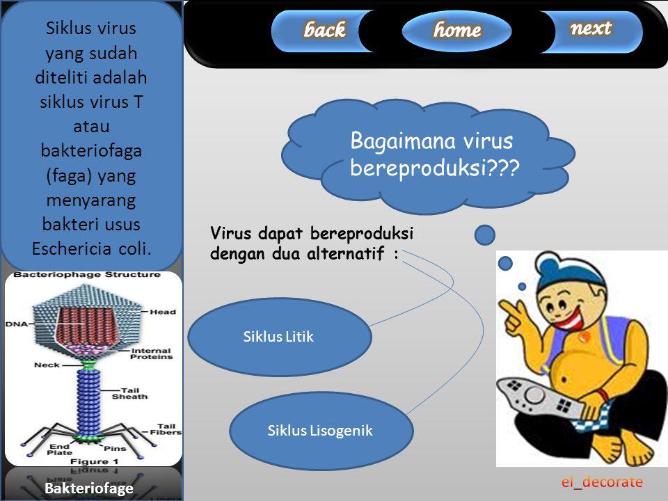 Bagaimana virus bereproduksi