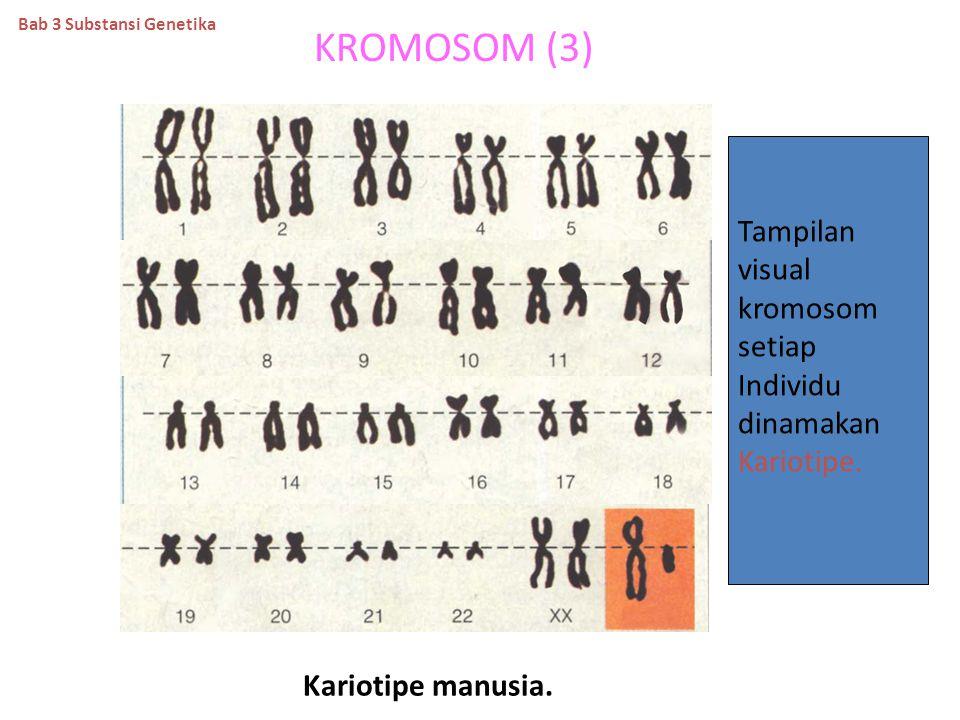 KROMOSOM (3) Tampilan visual kromosom setiap Individu dinamakan