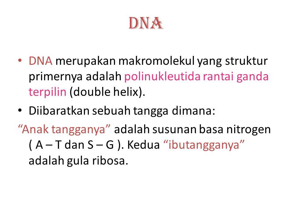 DNA DNA merupakan makromolekul yang struktur primernya adalah polinukleutida rantai ganda terpilin (double helix).