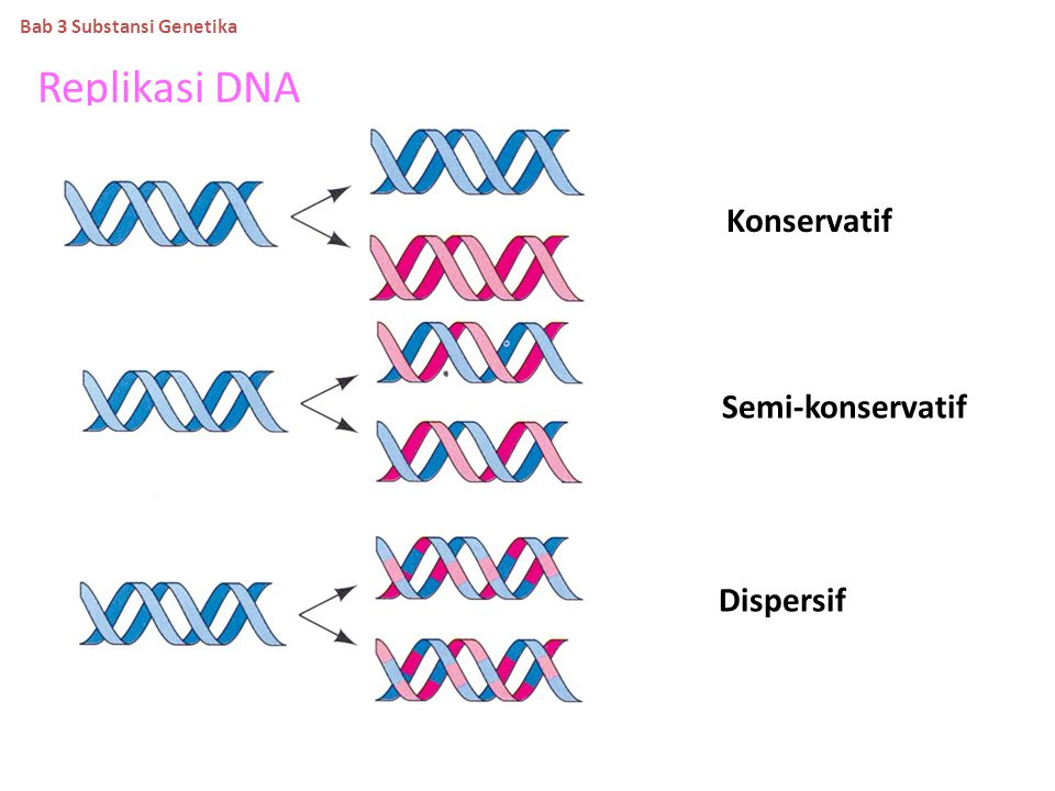 Replikasi DNA Konservatif Semi-konservatif Dispersif