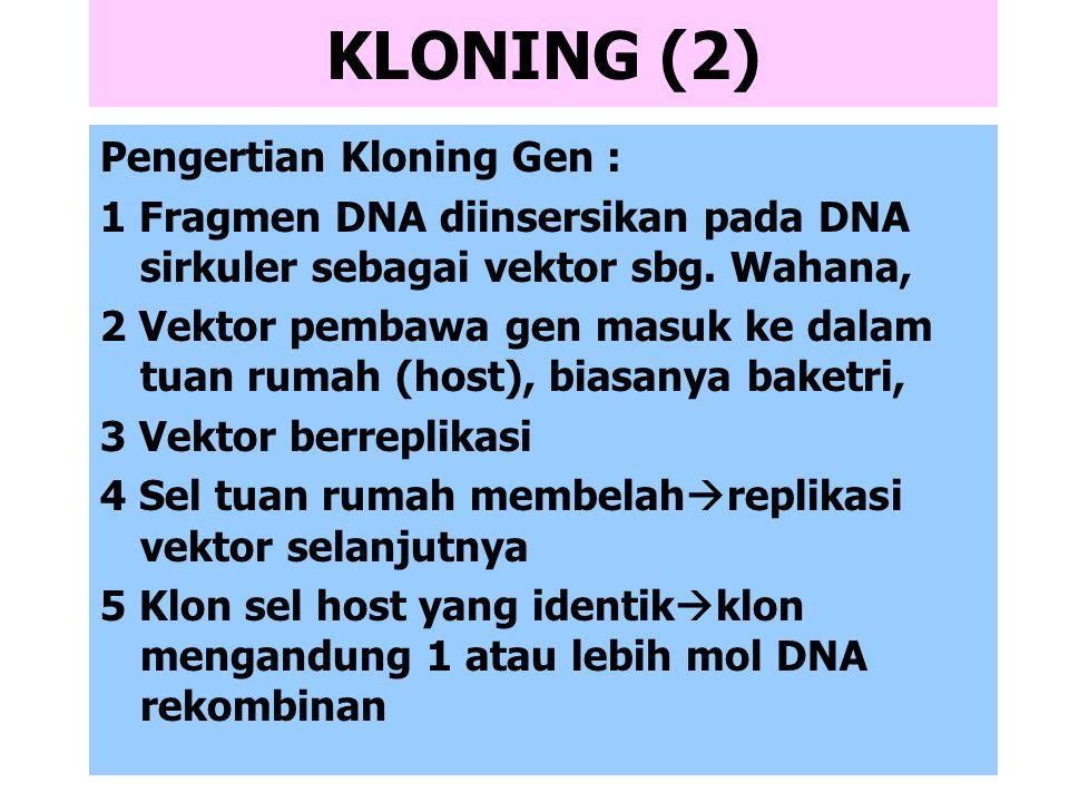 KLONING (2) Pengertian Kloning Gen :