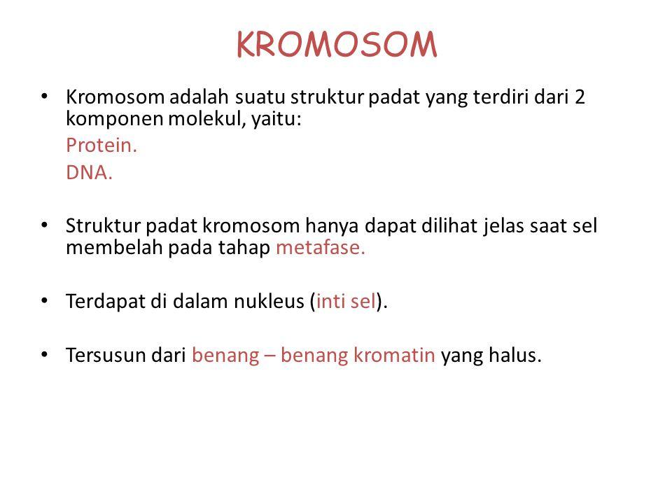 KROMOSOM Kromosom adalah suatu struktur padat yang terdiri dari 2 komponen molekul, yaitu: Protein.