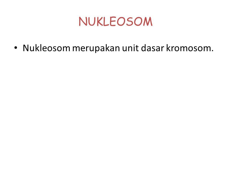 NUKLEOSOM Nukleosom merupakan unit dasar kromosom.