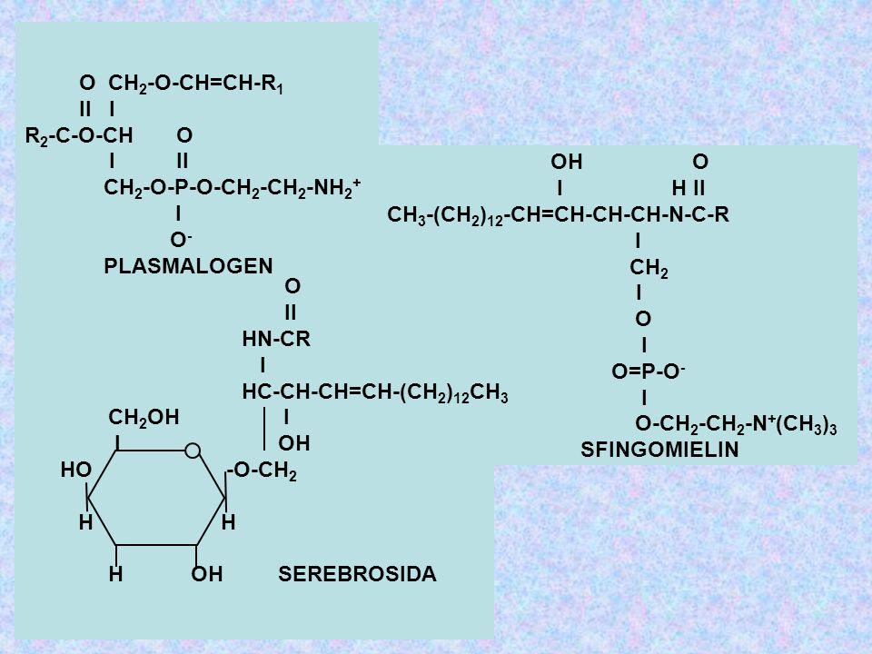 O CH2-O-CH=CH-R1 II I. R2-C-O-CH O. I II. CH2-O-P-O-CH2-CH2-NH2+ I. O- PLASMALOGEN.